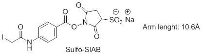 Sulfo-SIAB