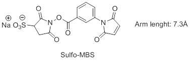 Sulfo-MBS