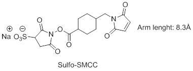 sulfo-SMCC