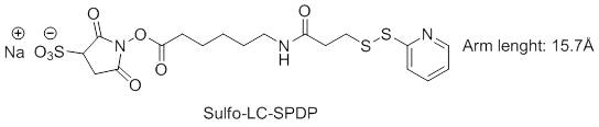 Sulfo-LC-SPDP