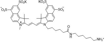 Sulfo-Cy3.5 amine