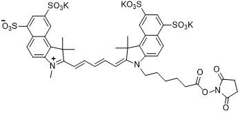 Sulfo-Cy5.5 NHS